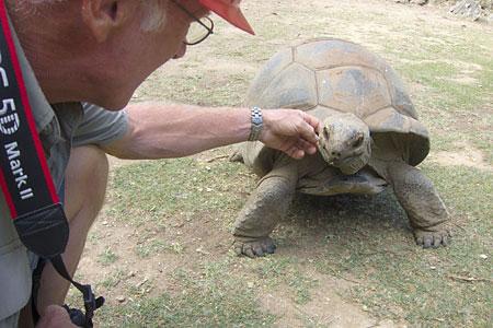 Schildkröten Ohne Panzer